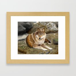 Wolf by the Riverbed Framed Art Print