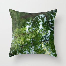 Ginkgo biloba tree in the city Throw Pillow