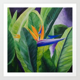 Bird of Paradise Painting by Teresa Thompson Art Print