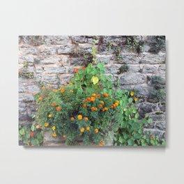 marigolds on stone wall Metal Print