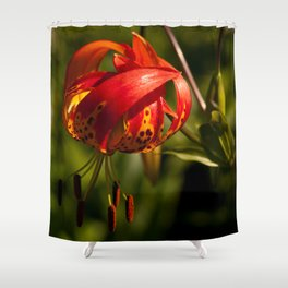 Firery Lily Shower Curtain