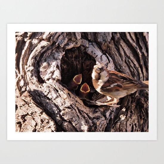 House Sparrow Keeping House Art Print