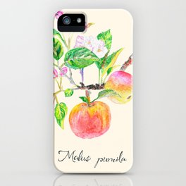 Apple tree branch, Malus Pumila iPhone Case