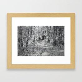 Forest Track Framed Art Print