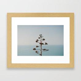 A plant. Framed Art Print