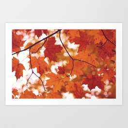 Fluttering from the Autumn tree Art Print