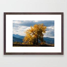 Glorious Autumn Gold Framed Art Print