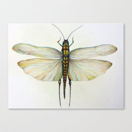 Locust Canvas Print
