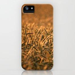 Golden grain | Goldenes Getreide iPhone Case