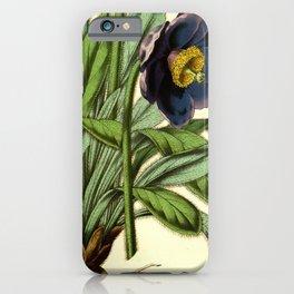 Flower meconopsis simplicifolia0 iPhone Case