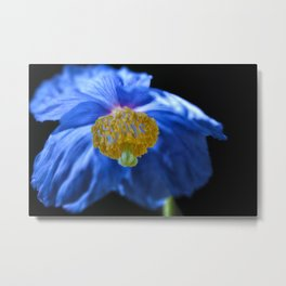 Blue Himalayan Poppy Flower Metal Print