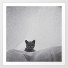 Kitten under the sheets Art Print