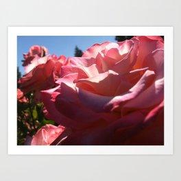 Pink Rose 1 Art Print