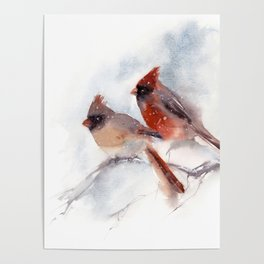 Northern Cardinal Birds Couple Poster