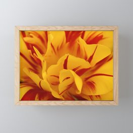 A Chaos of Reds and Yellows: in the Heart of a Triandrus Daffodil Framed Mini Art Print