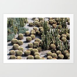 Cacti Paradise Art Print