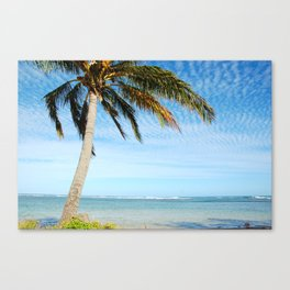 Palm tree in the wind.. Canvas Print