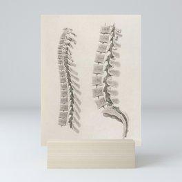 Anatomical Spine Mini Art Print