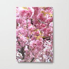 Cherry Blossoms 2 Metal Print
