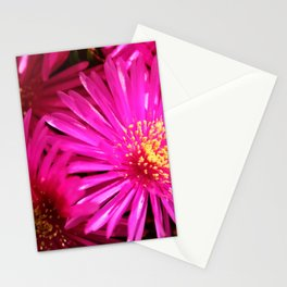 Ice Plant Pink Cactus Flowers Stationery Cards