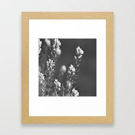 wild flower in the mountain Framed Art Print