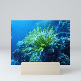 Tropical Aquatic Sea Coral Mini Art Print