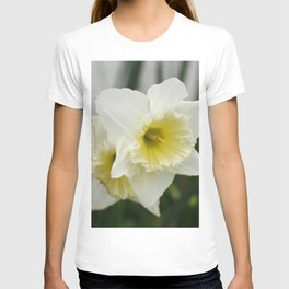 White and yellow daffodils, early spring flowers T-shirt