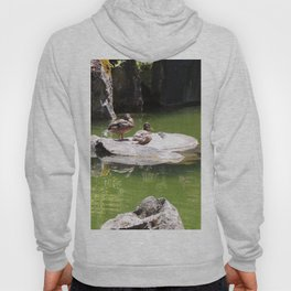 Ducks on a Rock in the Middle of a Pond, Wildlife, Ducks, Water Hoody