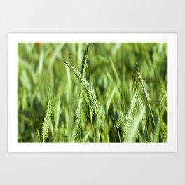 green cereals, close-up Art Print