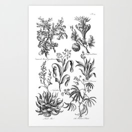 Antique Nepenthes and Drosera Print from 1757 Art Print