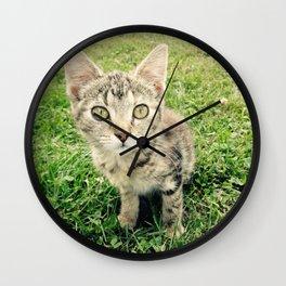 Inquisitive Cat Wall Clock