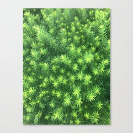 Nature for Days Canvas Print