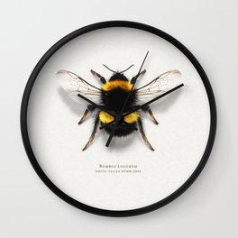 Bombus Lucorum Wall Clock