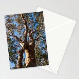 Scribbly Gum Tree, Muogamarra Reserve, Sydney Stationery Cards