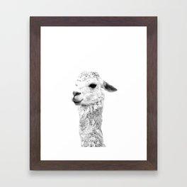 Black and white llama animal portrait Framed Art Print