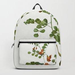 Blood Spotted Bladder Senna Colutea Orientalis from Traite des Arbres et Arbustes que lon cultive en Backpack