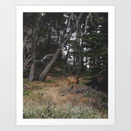 Lobos Deer Art Print