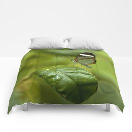 Transparent butterfly Comforters