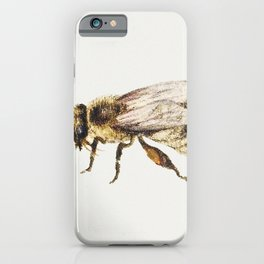Bee from Sheet of Studies of Nine Insects (1660-1665) by Jan van Kessel iPhone Case