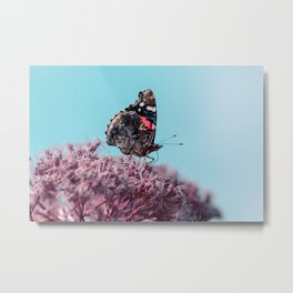 Red admiral butterfly on pink flowers Metal Print