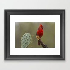 Cardinal in the Rain Framed Art Print