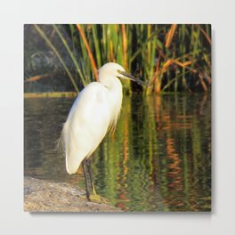 Egret at the lake Metal Print