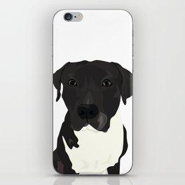 Atticus the Pit Bull iPhone Skin
