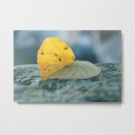 Leaf blues Metal Print