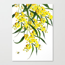 The Golden Wattle Vol.2  Canvas Print