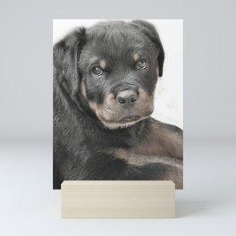Rottweiler puppy Mini Art Print