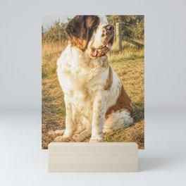 St Bernard dog in the sunset Mini Art Print