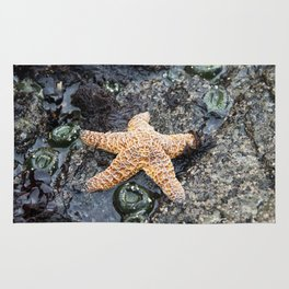 Starfish - La Push Rug