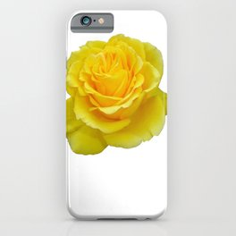 Beautiful Yellow Rose Closeup Isolated on White iPhone Case