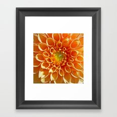 orange dahlia Framed Art Print